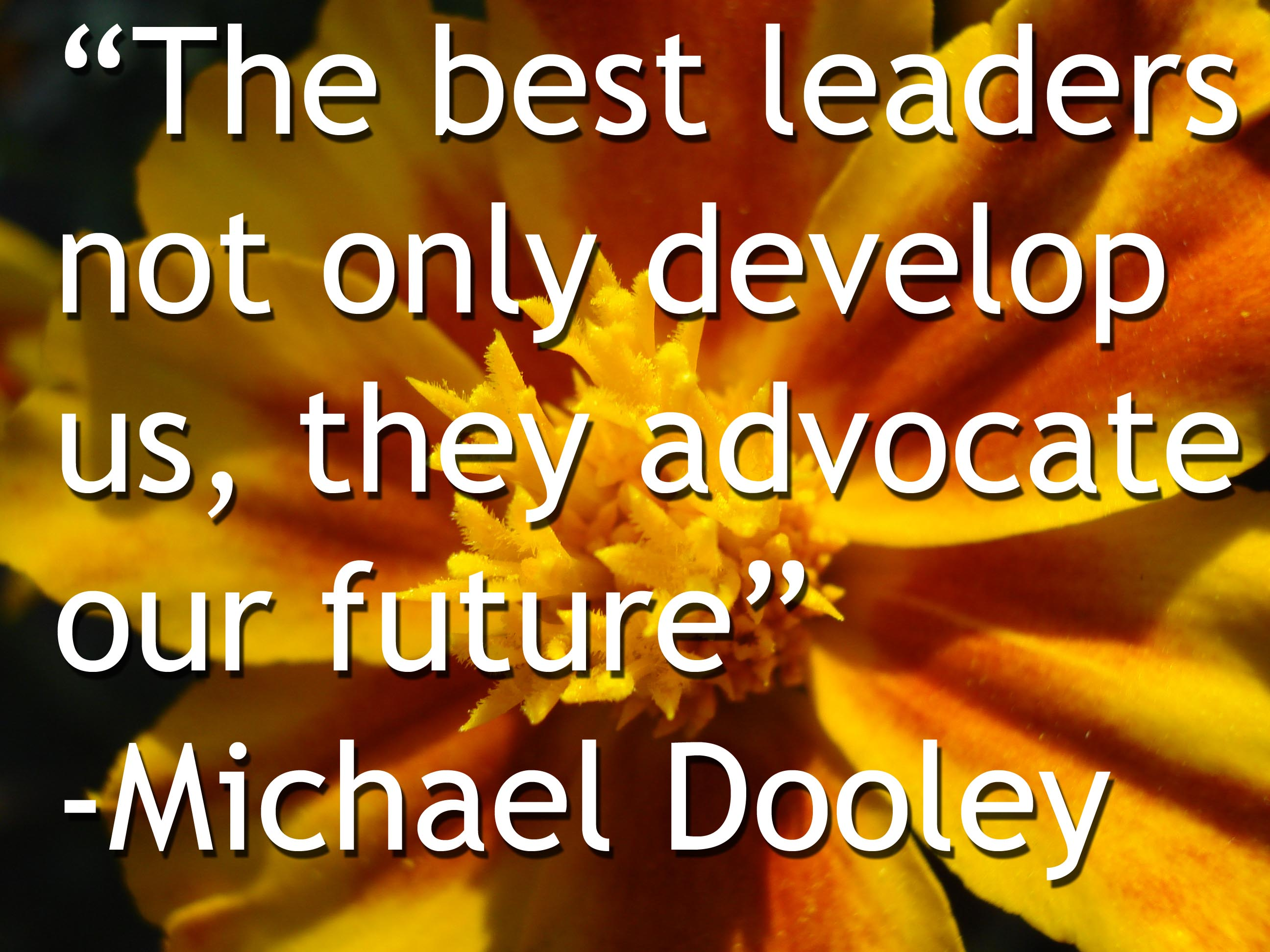 Leadership Quotes Fascinating Leadership Quotes  Leadership Advocates  Michaeldooleyblog